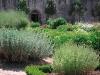 jardin-bot.jpg