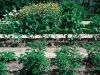 jardin-bot_1.jpg
